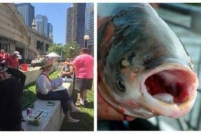 Friends of the Chicago River at last year's Asian Carp Grill.